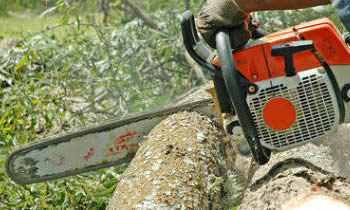 Tree Removal in Palm Harbor FL Tree Removal Quotes in Palm Harbor FL Tree Removal Estimates in Palm Harbor FL Tree Removal Services in Palm Harbor FL Tree Removal Professionals in Palm Harbor FL Tree Services in Palm Harbor FL