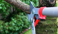 Tree Pruning Services in Palm Harbor FL
