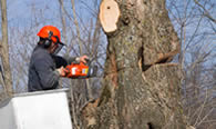 Tree Removal in Palm Harbor FL